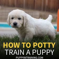 how to potty train a puppy house training our most recent puppy charlie