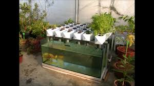 Easy And Healthy Backyard Aquaponics-Build Your Own Aquaponic Garden  YouTube