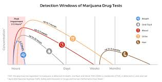 Saliva Drug Test Detection Times Chart 75 Veracious Passyourdrugtest Chart