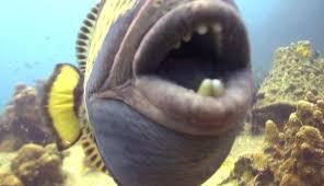triggerfish bite. Delighful Triggerfish To Triggerfish Bite YouTube
