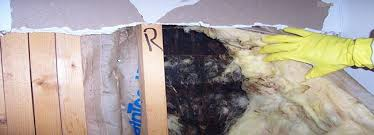 mold mitigation cost. Wonderful Mitigation Mold Affects Value Of Home  Black Mold Removal Cost Advantaclean For Mitigation Cost I