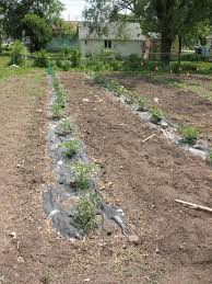 very best garden black plastic sheeting garden designs po37