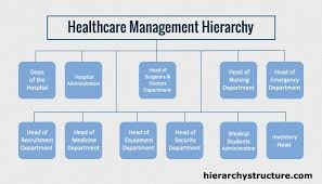 Healthcare Management Hierarchy Healthcare Administration