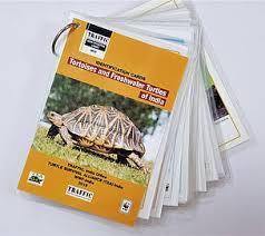 New Id Tools To Help Curb Illegal Trade Of Tortoises And