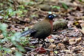 oiseau Martin 25 janvier trouvé par Ajonc Images?q=tbn:ANd9GcT87Vll42eBvNFmlwkQc9qyOBDMXxGo8BGaHg&usqp=CAU