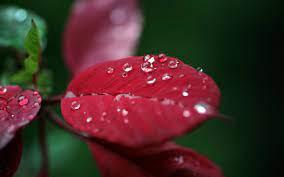 Flower Water Drop Wallpaper (Page 1 ...