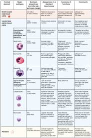 Blood Disorder Chart 18 3 Erythrocytes Anatomy And Physiology