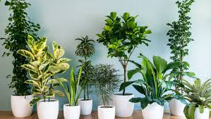 feng shui plants for office. Feng Shui Plants For Office. Plant : Small Indoor Modern Office G