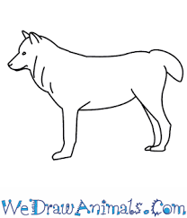 simple wolf drawing. Delighful Drawing For Simple Wolf Drawing