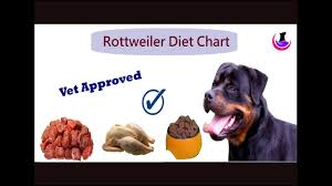 Rottweiler Puppy Diet Chart Rottweiler Diet Chart Hindi