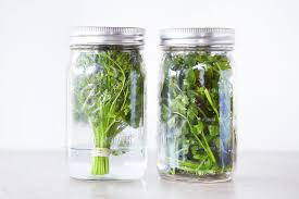 mason jars are simply the best herb keepers whether you choose to add water at the bottom and keep your stems in tact as a bunch or pack the jar with