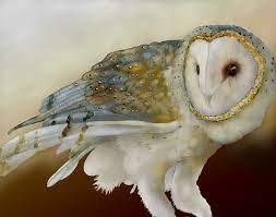 Artwork of Jeannine Chappell; love her barn owls  http://www.east-bay.com/jeannine/ | Bird prints, Barn owl, Owl art