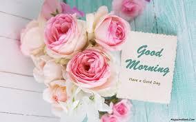 good morning pink rose hd wallpaper