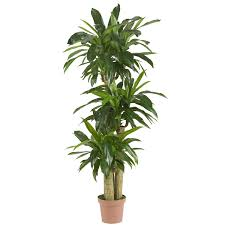 Decorative Indoor Trees 45 Foot Real Touch Indoor Cornstalk Dracaena Tree In Decorative