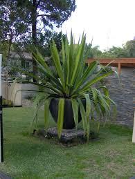 big outdoor plant pots pots big outside plant pots