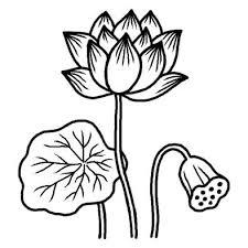 ハス1夏の花無料白黒イラスト素材 рисувани цветя イラスト