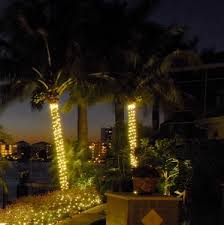 outdoor strand lighting. interesting strand light up palm tree outdoor  also string lighting  for your inside strand