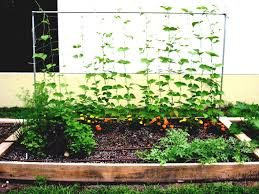Small Picture Layout Raised Garden Bed Herb Plans Small Vegetable