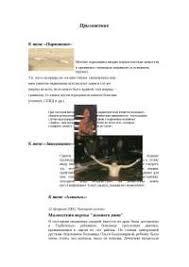 Содержание Список Литературы Титульный лист Вредные факторы  Содержание Список Литературы Титульный лист Вредные факторы Здоровый образ жизни реферат