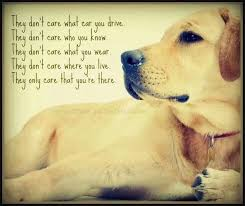Love My Dog Quotes Mesmerizing I Love My Dog Quotes On QuotesTopics