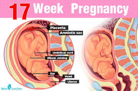 17th Week Pregnancy Symptoms Baby Development Tips And
