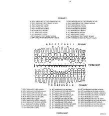Standard Dental Chart Identification Of Teeth