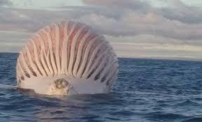 ocean blob found in western australia