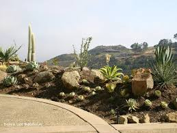 Small Picture How to Care for Succulents Garden Design