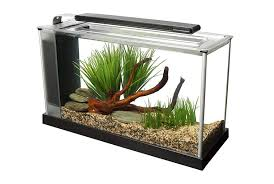 Decorative Betta Fish Bowls Betta fish tanks and plus betta fish care and plus fighting fish 57