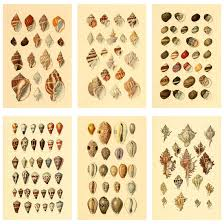 Seashell Chart Amazon Com Meishe Art Poster Print Vintage Seashell Conch
