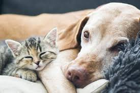 Compare Cheap Pet Insurance Quotes Compare The Market Classy Life Insurance Quotes Compare The Market