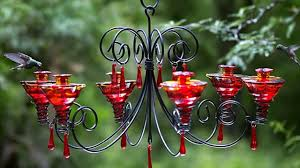 makings of a quality hummingbird feeder understand what bird looking for