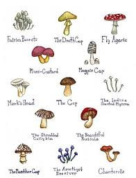 Florida Mushroom Identification Chart Pin On Gift Ideas
