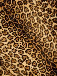 leopard background for twitter leopard print background