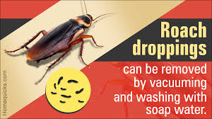 Effective Ways To Get Rid Of Roach Droppings