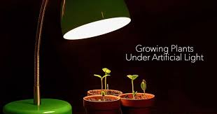 growing plants under artificial light using a grow light bulb with seedlings sprouting