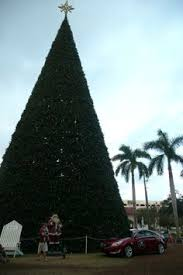delray beach tree lighting. simple tree the 100foot christmas tree every photo brings out the beauty in a  different delray beachthe  and beach tree lighting
