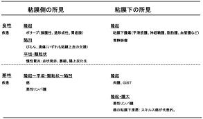 消化管造影検査バリウムと内視鏡検査の違いは何ですか 日本消化