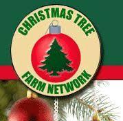 How To Start A Christmas Tree Farm  Profitable Plants DigestChristmas Tree Cutting Nj