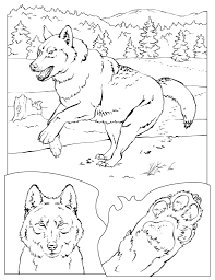Small Picture Lion Coloring Pages National Geographic In esonme