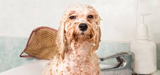 Image result for dog grooming
