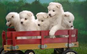 cute pets wallpaper 6784997