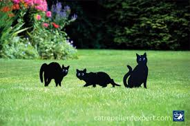 cat repellent for garden. The Top 5 Cat Deterrents For Keeping Cats Away From Your Garden Repellent