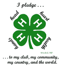 Image result for 4-h clover