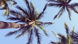 Models Palm Trees Tumblr Vertical La City Throughout Design Ideas
