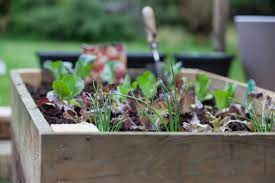 how to start a home vegetable garden
