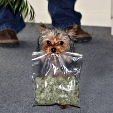 Image result for dogs using pot