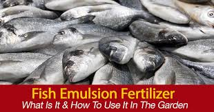 fish oil fertilizer for plants
