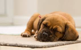 23 aug new home new puppy tips that can prepare you for this major event