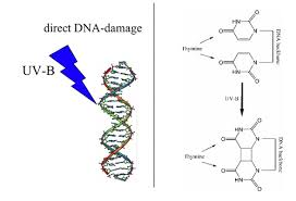 Dna Replication Definition Principles Of Biochemistry Cell Metabolism I Dna Replication
